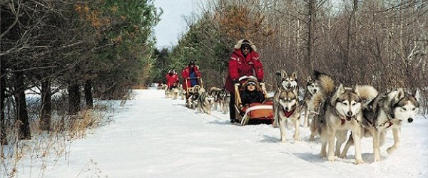 Tremblant dog sledding